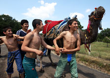 Young wrestlers enjoy the appearance of a camel at the Velimese Turkish Oil Wrestling Festival in Turkey. Royalty Free Stock Photo