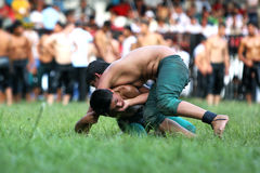 Young wrestlers fight for victory at the Kirkpinar Turkish Oil Wrestling Festival in Edirne in Turkey. Royalty Free Stock Image