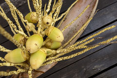Young yellow coconut Stock Images
