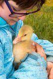 Little girl wearing glasses cradling a young gosling with her d stock photos