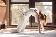 Free Young Yogi Attractive Woman In Cat Pose, Home Interior Backgroun Royalty Free Stock Images - 91524479