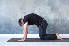 Young yogi men practices yoga asana bitilasana or cat cow pose stock image