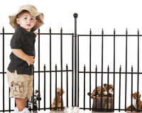 Young Zoo Keeper. An adorable preschooler playing zookeeper with his toy animals royalty free stock images