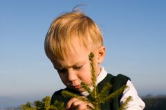 Young zoologist. The little boy studies a structure of a fur-tree Royalty Free Stock Photo