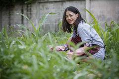 Younger asian woman in home gardening ,hipster people lifestyle Stock Photography