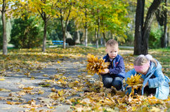 Youngsters collecting autumn leaves Royalty Free Stock Images