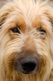 Your best pal. Cute dog face close-up portrait Royalty Free Stock Photo