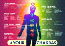Your 7 Chakras. Creative colorful Illustration of the human chakras and a full text description of each. The image of a person and the visual position of chakra Royalty Free Illustration