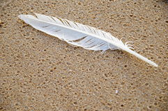 On your feather. White sea gull feather in the sand and washed by the waves Stock Images