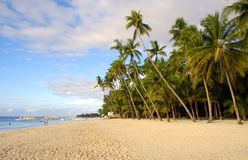 Your Own Tropical Beach. White sand tropical beach with coconut trees Royalty Free Stock Photography