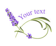 Your text template. Frame of lavender flower in watercolor paint style. The lavender elegant card with flower and text. Lavender for your text presentation Royalty Free Stock Images