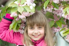 Youth bloom, freshness royalty free stock photo