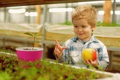 youth concept de gezonde jeugd met goede toekomst de jeugd in gezicht van gelukkig weinig verse appel van de jongensgreep in serr stock foto