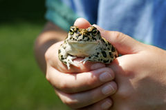 Youth holds a frog Royalty Free Stock Photo