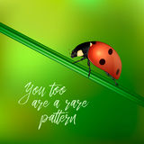 Yoy too are a rare pattern - vector background with quote and realistic ladybug insect on a blurred green. EPS10. Royalty Free Stock Images