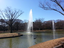Yoyogi Park. Shibuya during winter time in January. Sunny day, but chilly Royalty Free Stock Photography