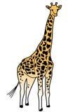 żyrafa ilustracja wektor