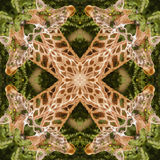 Żyrafa abstrakt Fotografia Royalty Free