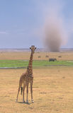 Żyrafa i burza piaskowa w amboseli, Kenya Zdjęcia Stock