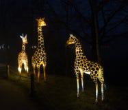 Żyrafa robić od papieru i świateł Obraz Royalty Free