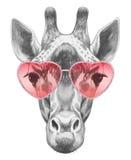 Żyrafa w miłości! Portret żyrafa z okularami przeciwsłonecznymi Obrazy Royalty Free