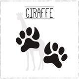 Żyrafa z śladami Obraz Royalty Free