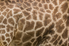żyrafy deseniowa bezszwowa skóry tekstura Obrazy Royalty Free