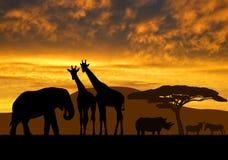 Żyrafy, słoń i nosorożec, Zdjęcia Royalty Free