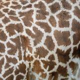 Żyrafy skóra Obrazy Stock