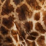 Żyrafy skóra Zdjęcia Stock