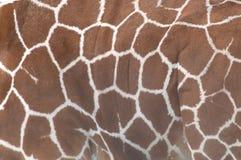 Żyrafy skóra fotografia stock