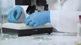 Yrkesmässig bakteriolog som sätter blodprövkopian på mikroskopet, sakkunskap Arkivfoton