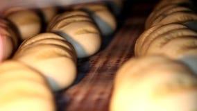 Yrkesmässig kockmatlagning, arbete och förbereda sigmat i restaurangkök stock video