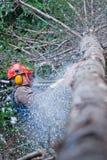 Yrkesmässig skogsarbetare Cutting ett stort träd royaltyfri fotografi