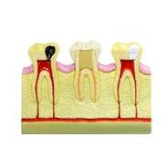 Yrkesmässig tand- teknologi, medicinutrustning arkivbilder