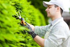 Yrkesmässig trädgårdsmästare som beskär en häck Royaltyfri Fotografi