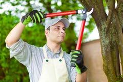 Yrkesmässig trädgårdsmästare som beskär ett träd fotografering för bildbyråer
