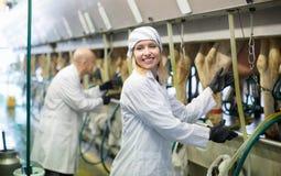 Yrkesmässiga mjölkare som fungerar att mjölka för maskin Fotografering för Bildbyråer