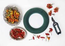 Yrkesmässiga skumcirkel- och höstväxter Royaltyfri Fotografi