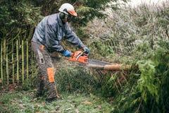 Yrkesmässig trädgårdsmästare som använder chainsawen Fotografering för Bildbyråer