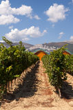 Ysios bodega and vines, LaGuardia, La Rioja, Spain Stock Image