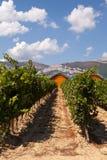 Ysiosbodega en wijnstokken, LaGuardia, La Rioja, Spanje Stock Afbeelding