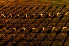 Ysselsteyn German military war cemetery stock photography