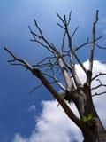łysy drzewo fotografia royalty free