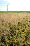Żyta pole Zdjęcia Stock