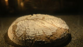 Żyto chleb