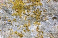 Yttersida av den gamla stenen med mossa för gul gräsplan Arkivfoton