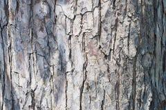 Yttersida av den gråa trädhudpeelen arkivfoton