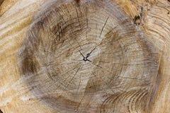 Yttersida av det avverkade trädet arkivfoton