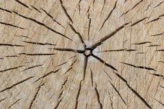 Yttersida av det avverkade trädet arkivfoto